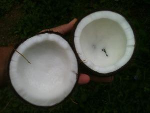 Minyak yang dihasilkan dari kelapa