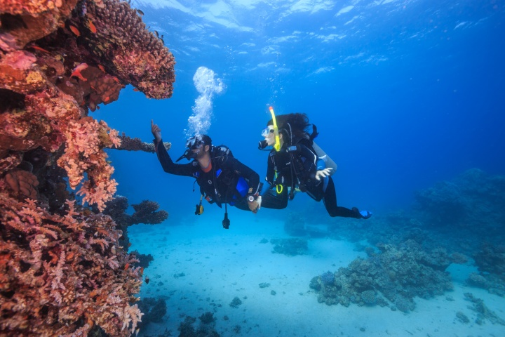 Diver in the Red Sea, Egypt
