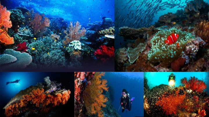 Raja-Ampat-Underwater-Tour-Diving