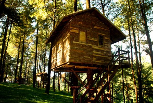 Rumah pohon (www.thetamandayu.com)